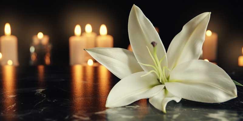 Blume in Kerzenschein.