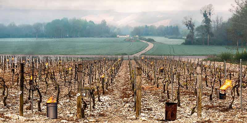 Frostschutz am Weinberg um Frostschäden bei Weinreben zu verhindern