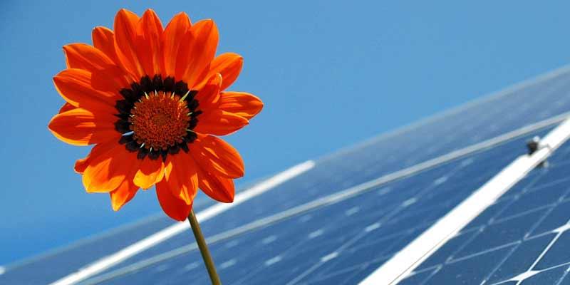 Blume und Solaranlage