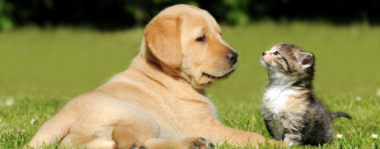 Tierkrankenversicherung für Hunde und Katzen