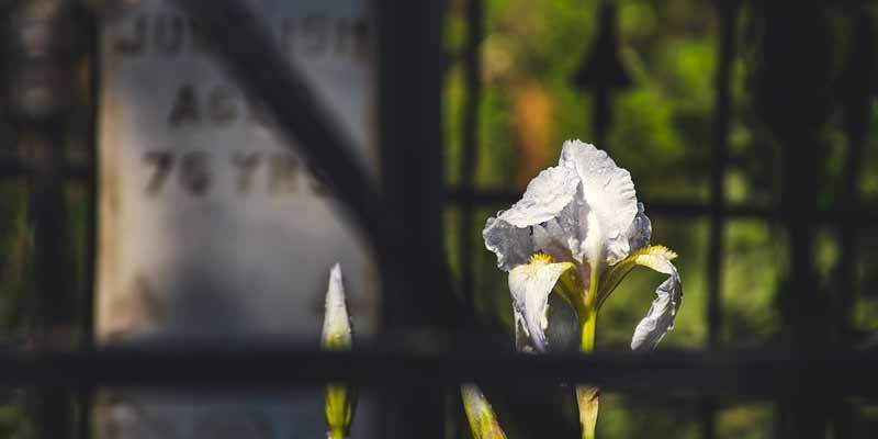 Grabstein und Blume auf Friedhof