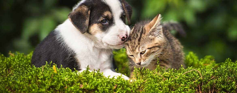 Die Tierkrankenversicherung übernimmt die Kosten der Tierarztbehandlung