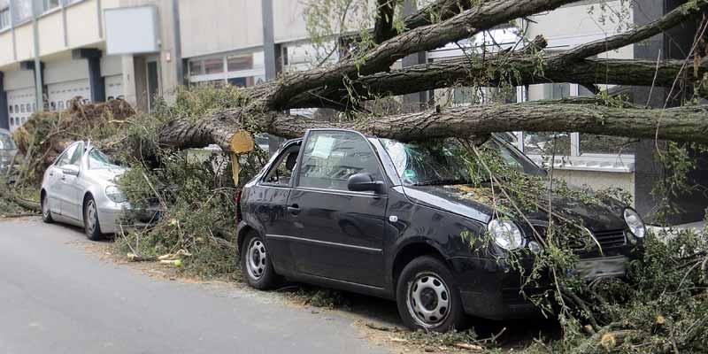 Ein Baum ist beim Sturm auf mehrere Autos gestürzt