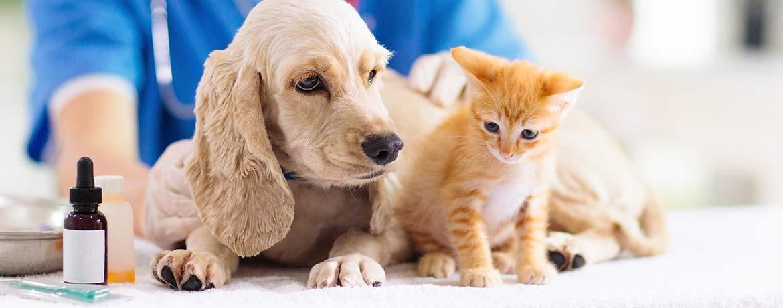 Beste Versorgung beim Tierarzt - Eine Tierkrankenversicherung fängt diese Kosten auf.