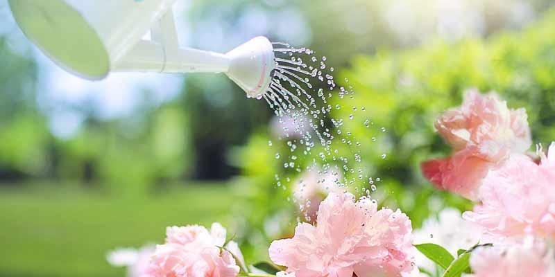Blumen im Garten werden gegossen