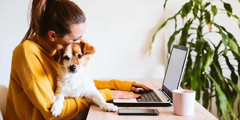 Junge Frau sitzt mit Hund am Laptop