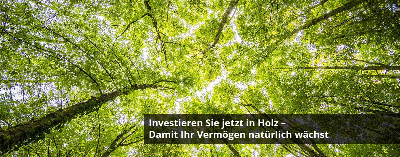 Holzinvestment