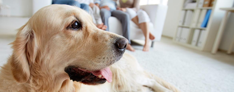 Tierhalter-Haftpflicht