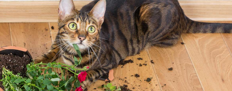 Katze zerstört Blumenvase