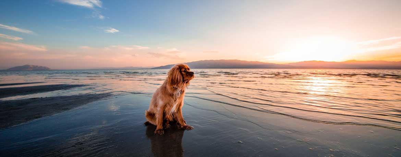 Urlaubsreisen mit Hund