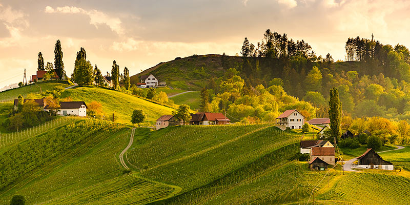 Grüne Weinberge vor einem Abendhimmel