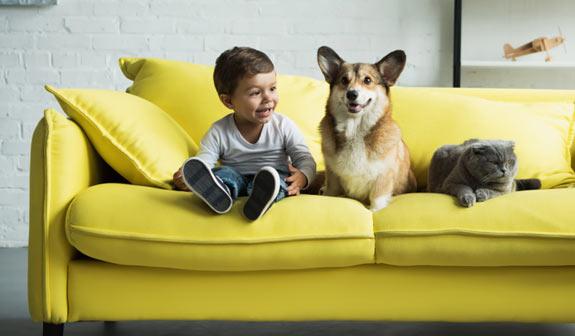 Kleiner Junge sitzt mit Hund und Katze auf gelber Couch und freut sich